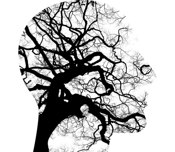 Mental-Health-Tree-Branches-Brain-Thinking-Disorder-2313430.jpg